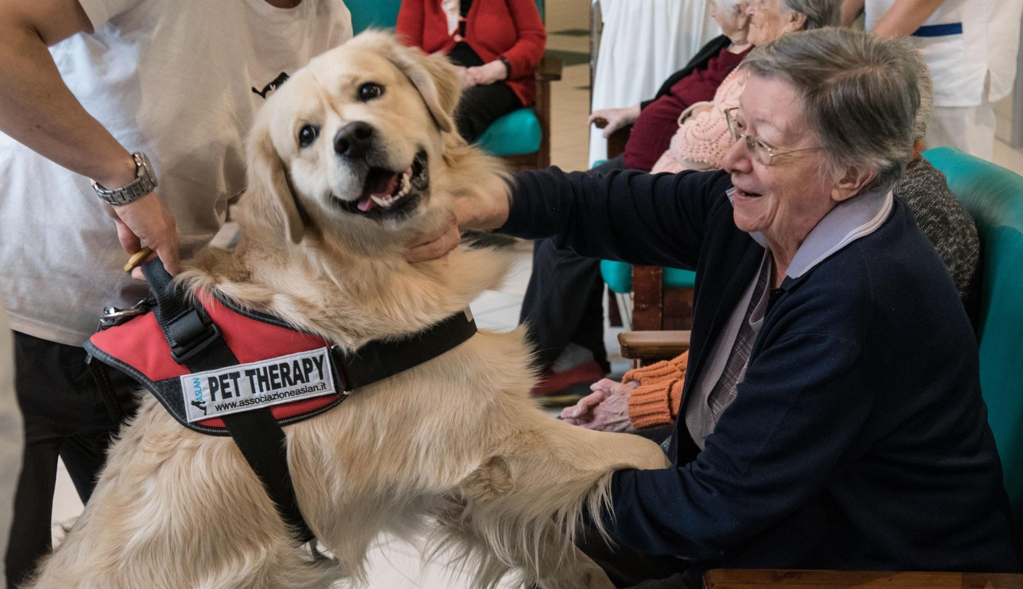 Tredicesime pet therapy e ospedali l aiuto di specchio - Specchio dei tempi torino ...