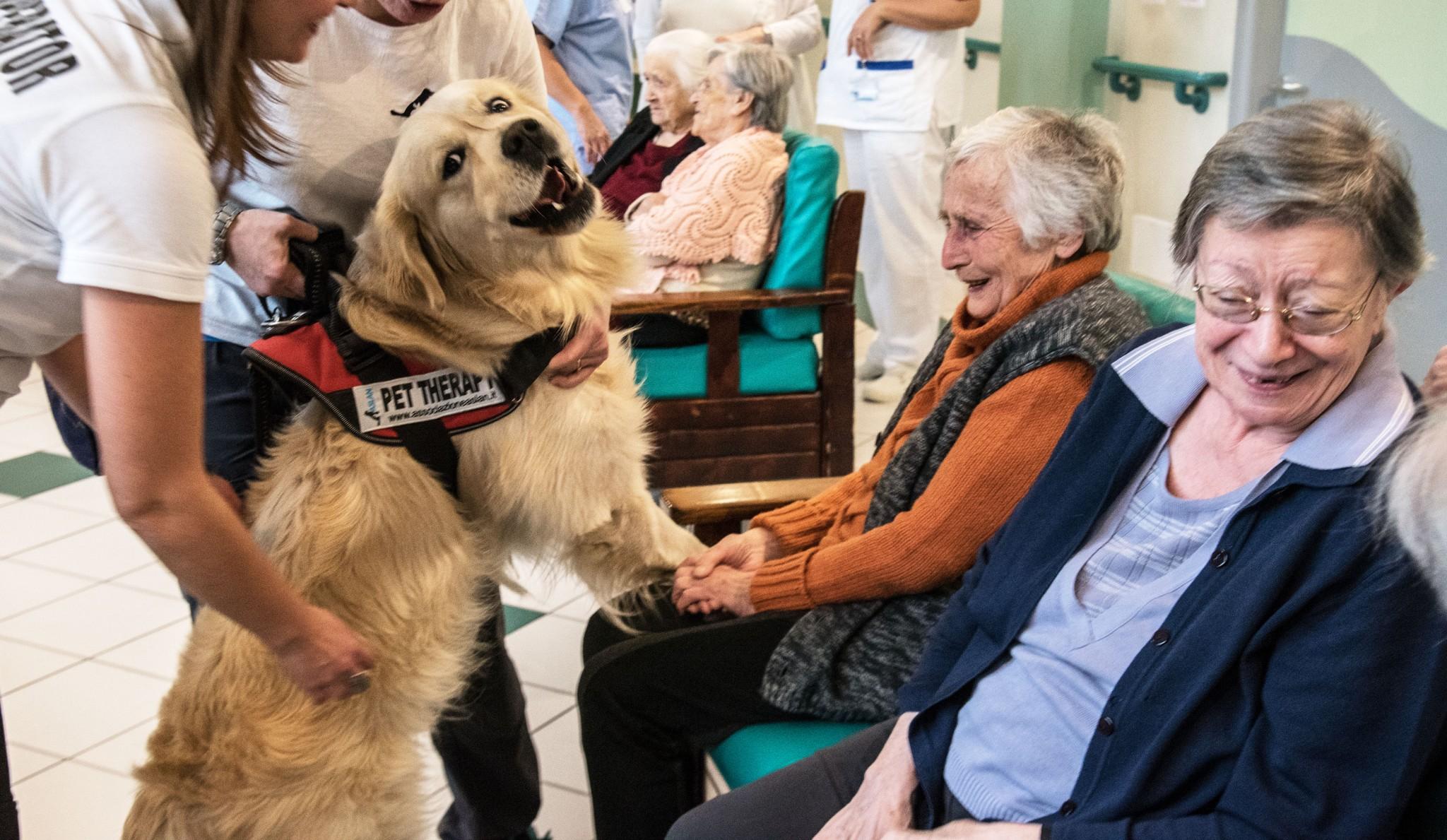 La pet therapy per i malati di alzheimer - Specchio dei tempi torino ...